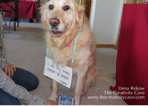 Dog Shaming!  My dog ate my card...and 4 cupcakes!